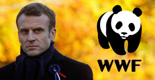 WWF Pede ao Presidente Francês que Pare Projecto de Exploração Mineira na Guiana Francesa